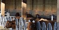 Stall- & Weidetechnik