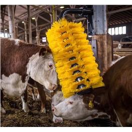 Viehbürsten